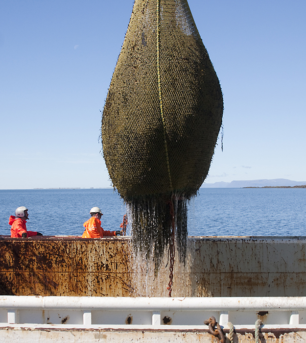ftc-cashmere_about_lines_seacell_island_algae
